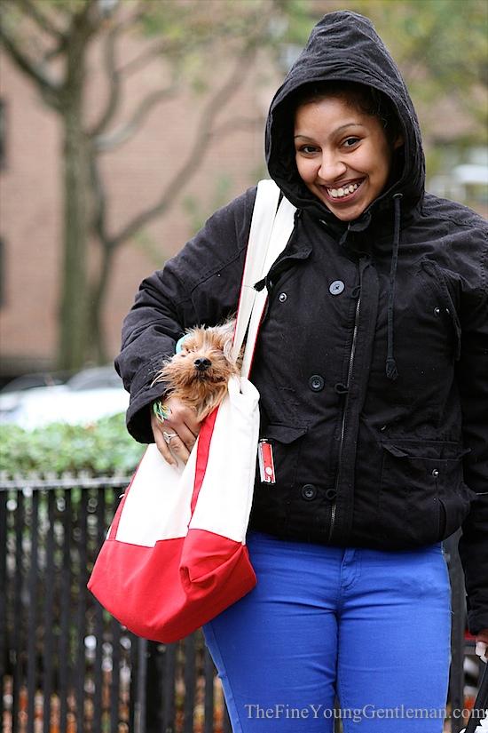 hurricane sandy street fashion dog